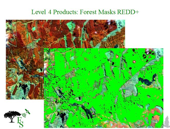 Level 4 product forest mask