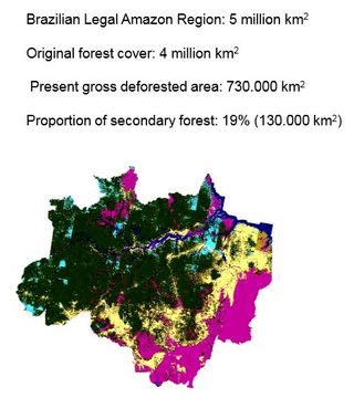 Brazil forest cover 2013 INPE